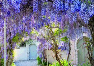 Gardens of Corfu 2